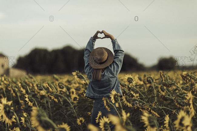 Rear view of young woman standing in a sunflower field holding her hands up in the shape of a heart