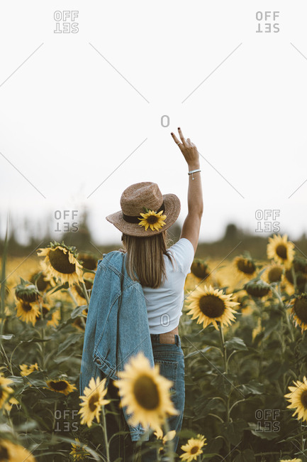 Rear view of young woman standing in a sunflower field holding her hands up in a peace sign