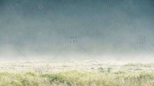 Haze above a grassy field at sunrise