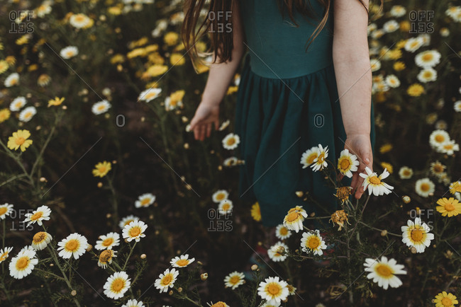 Close up of little girl touching flowers as she walks through a field