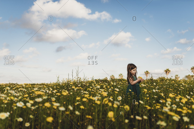 Little girl in dress standing in field of yellow flowers with blue sky