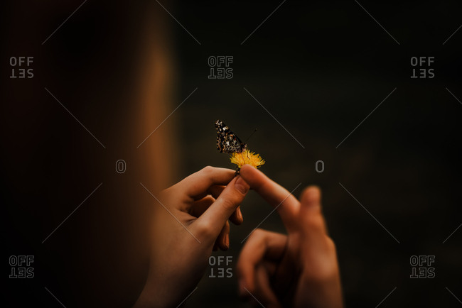 9 year old holding dandelion with a butterfly on it