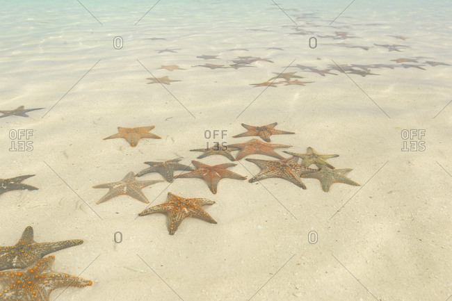 Overhead view of sea stars in a tide pool on Zanzibar island, Tanzania