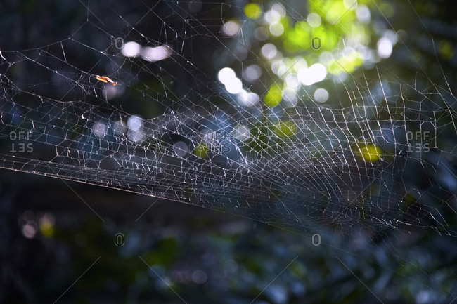 Spider web in the forest. Close-up view