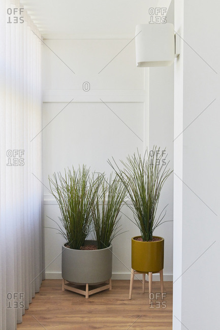 Two decorative vases with plants inside a home in Portugal