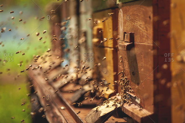 Swarm of bees surrounding beehive boxes