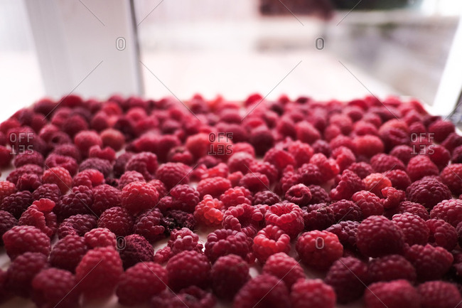 Close up of a bunch of fresh picked raspberries