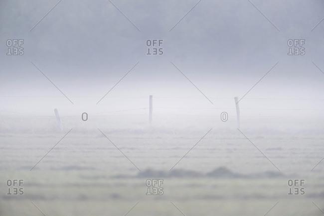 Hazy fog covering farmland - Offset