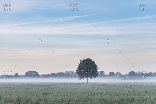 Hazy fog covering farmland and trees
