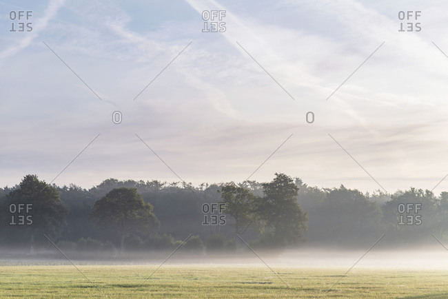 Hazy sunrise over field and trees in late summer