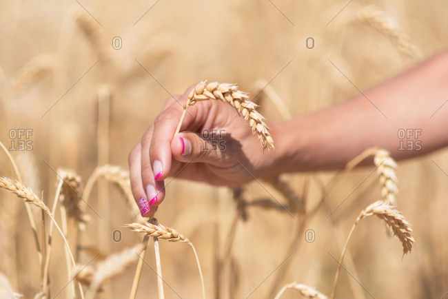 Crop woman with cereal grass in meadow
