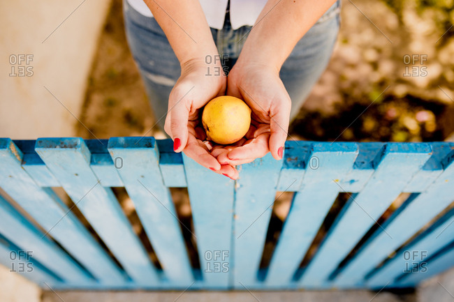 From above crop view of woman holding yellow apple over low wooden fence in summer on blurred background
