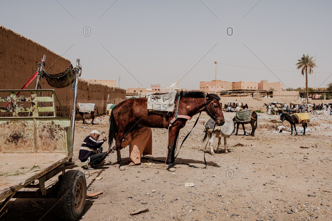 September 2, 2019: side view of ethnic local men putting horseshoe on hoof of brown horse on sunny day in town in morocco