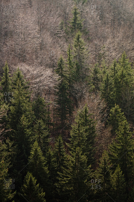 From above autumn forest with different evergreen and bare fir trees in southern poland on daytime
