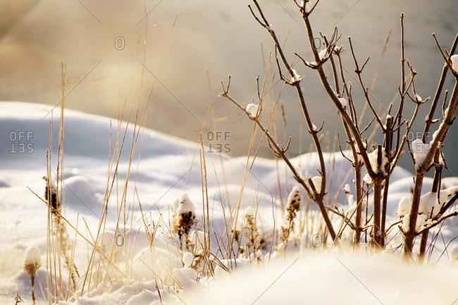 Frozen tree twig in crystals of hoarfrost in winter snowy forest in sunshine
