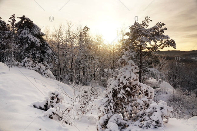 Leafless frosted trees covered with white pure snow in winter woods of norway