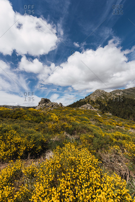 Amazing landscape of stone hills covered by dry grass and yellow flowers under big fluffy white clouds on sky
