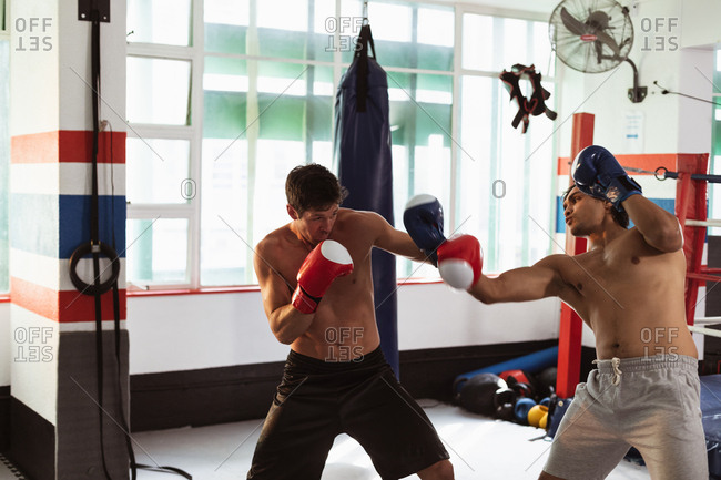 Side view of young Caucasian and a young mixed race male boxers sparring in a boxing gym