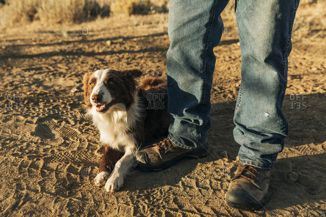 Border collie dog with rancher