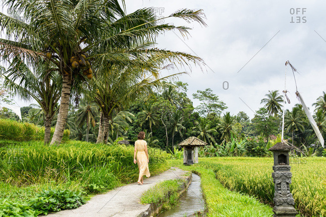 Young woman in the bright dress walking through the rice fields
