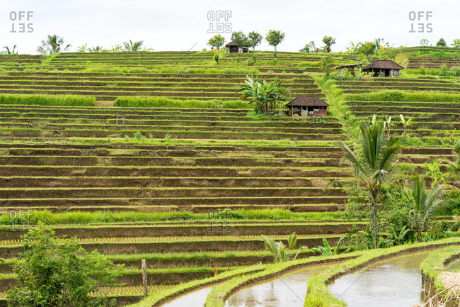 Two sheds in the middle of the rice fields