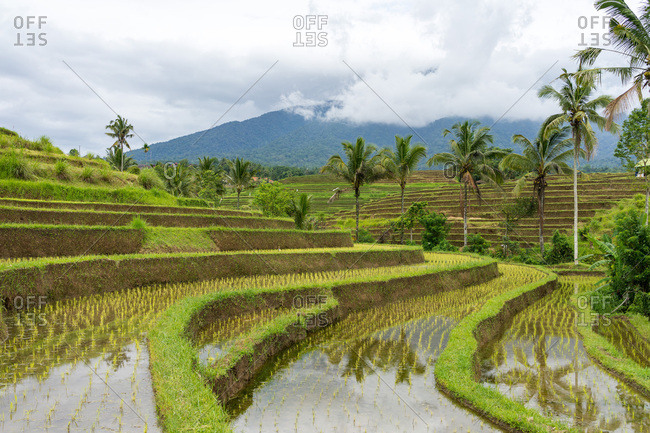Mountain in the blanket of clouds at the rice fields