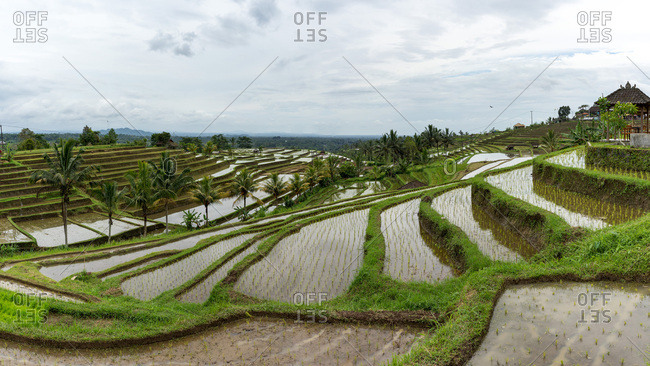 Rice terraces leading to horizon