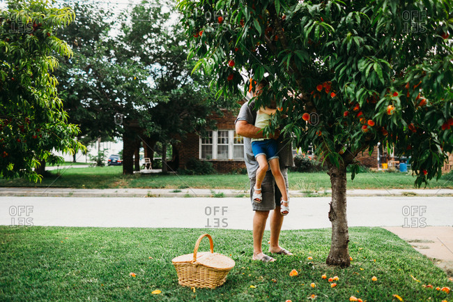 Grandpa holding granddaughter up to pick peach from tree in front yard