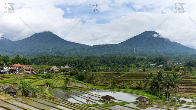 Indonesia, bali - january 1, 2019: jungle covered mountains reflecting in rice terraces