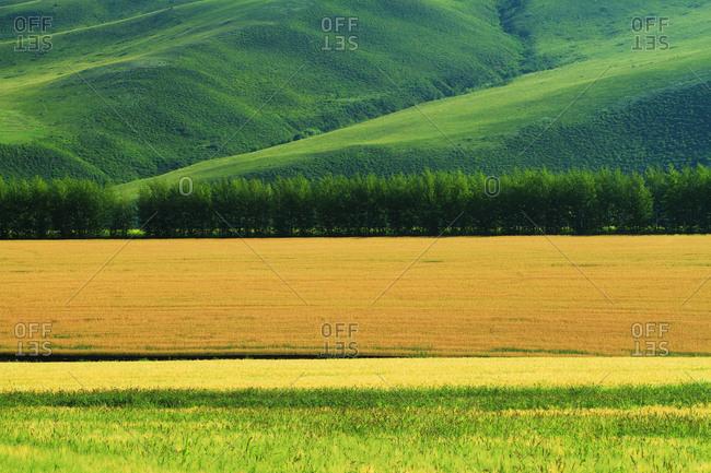 The hulunbuir fields
