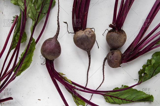 Beetroots on rustic white tray with leaf
