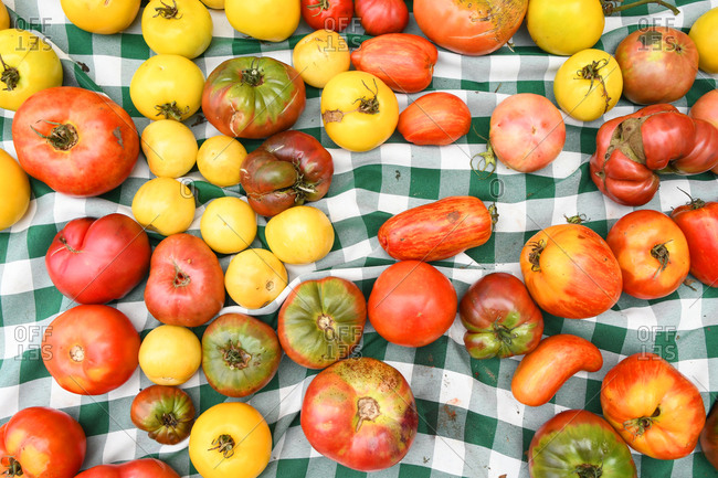 Multicolored heirloom market tomatoes on green checkered tablecloth