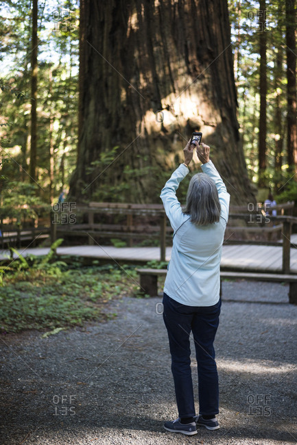 Middle-aged woman with phone looking at redwoods in California