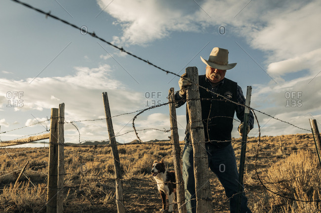 Rancher fixing barbed wire fence with border collie dog