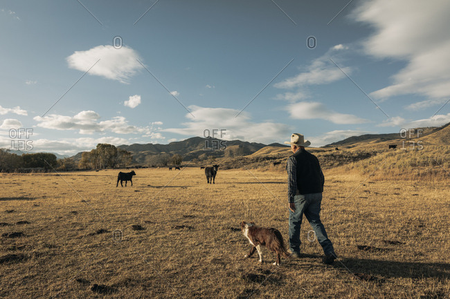 Rancher walking his land with border collie dog