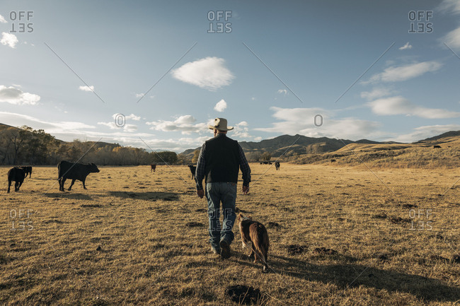 Rancher walking his land with border collie dog from behind
