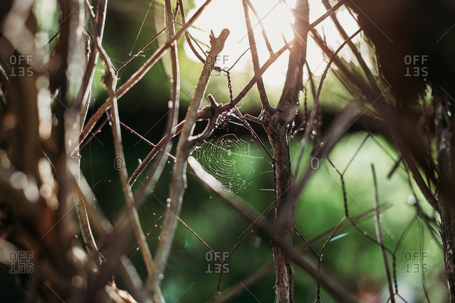 Small spiderweb on branches