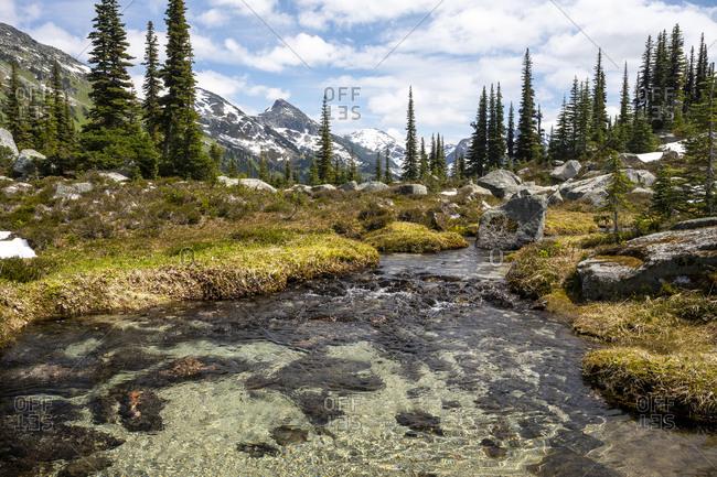 A creek runs through an alpine mountain meadow in british columbia.