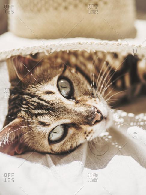 Lovely cat lays blissfully under sun