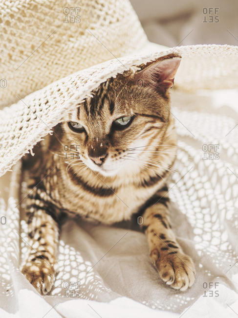 Lovely cat lays blissfully under sun and hat