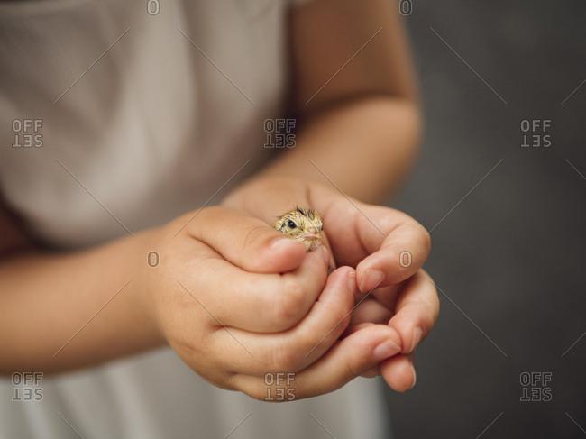 Holding a cute baby quail