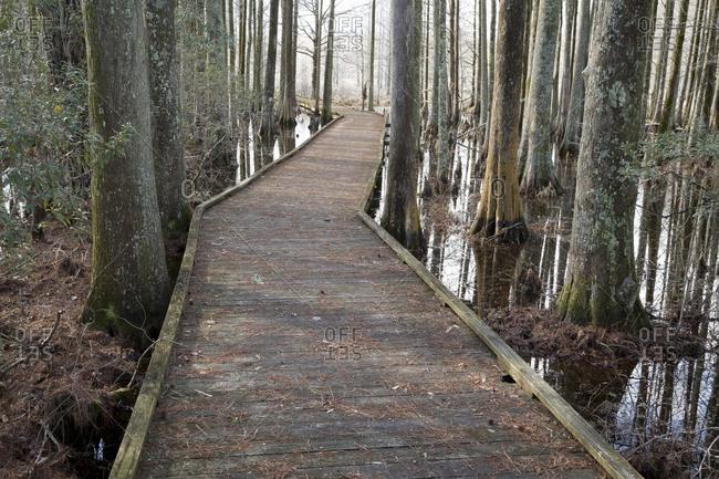 Boardwalk along a hiking trail through a cypress swamp