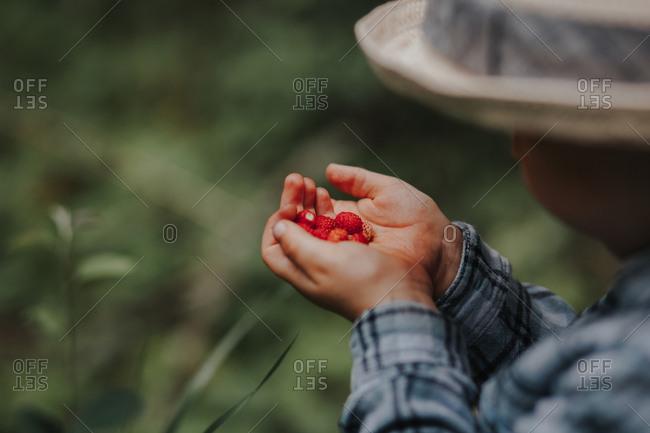 Little boy holding wild strawberries in nature