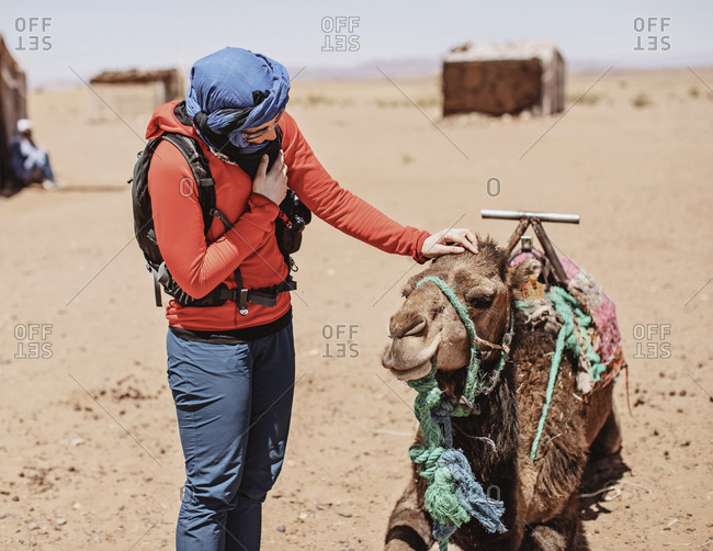 Sahara Desert, Morocco - April 7, 2019: Female western tourist with hijab pats a camel in the desert, morocco