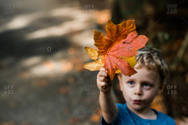 Little boy holding colorful leaves in the air in autumn