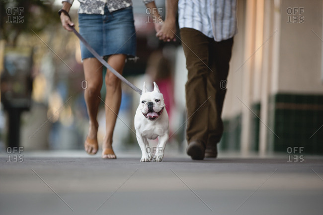 Couple out and about walking their dog together and holding hands.