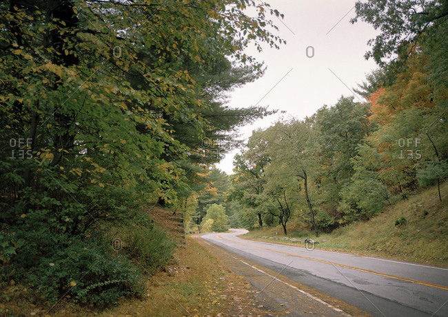 View of a road amidst the woods.