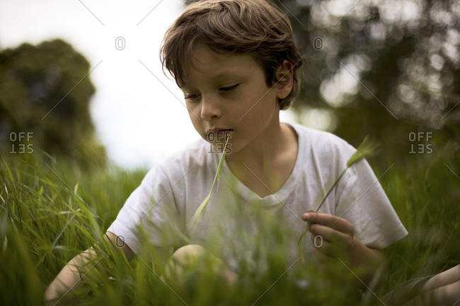 View of a boy plucking some flowers.