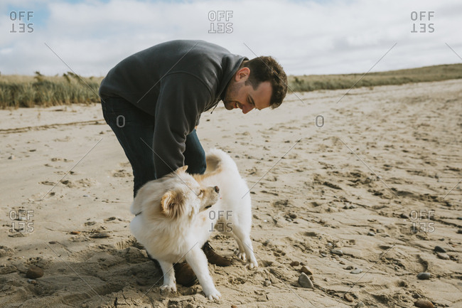 Man stroking cute dog on beach