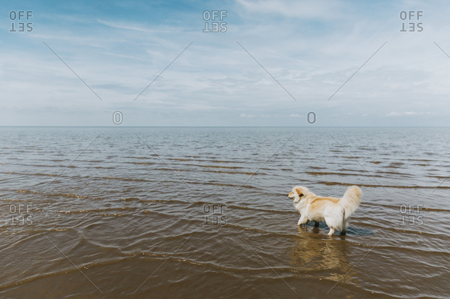 Cute dog paddling in the ocean against a cloudy sky